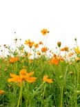 flowersnieuwsbrief